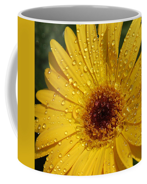 Yellow Coffee Mug featuring the photograph Yellow Gerbera by Suzanne Gaff