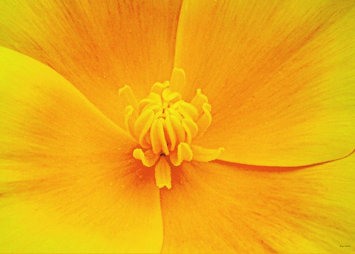 Centerpiece . Yellow Greeting Card featuring the photograph A Study In Yellow- Centerpiece 003 by George Bostian