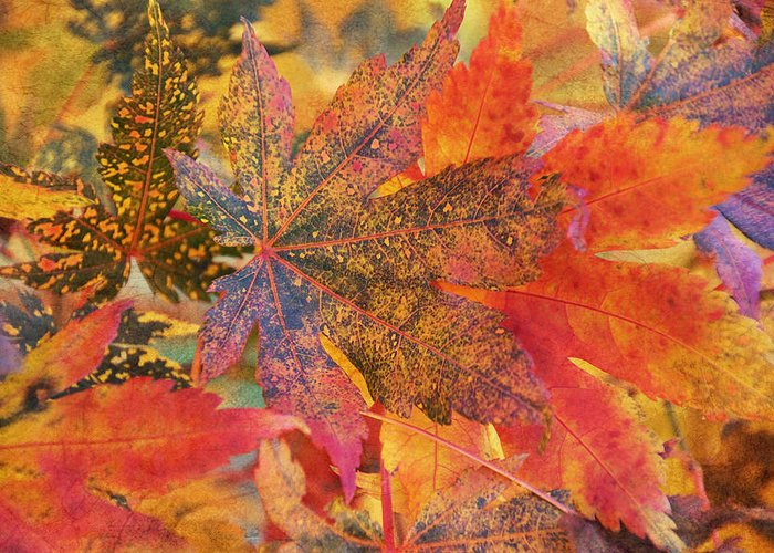 Autumn Greeting Card featuring the photograph Autumn Audacity I by Leda Robertson