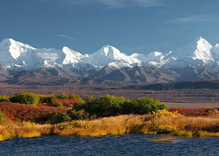 Alaska Greeting Card featuring the photograph  Denali's Path by Ed Boudreau