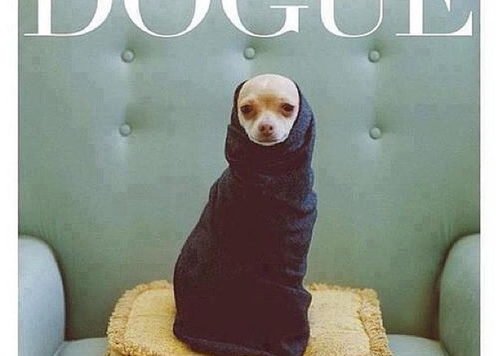 Dogue Greeting Card featuring the photograph 😂😂😂😂 #dogue #vogue by Matheo Montes