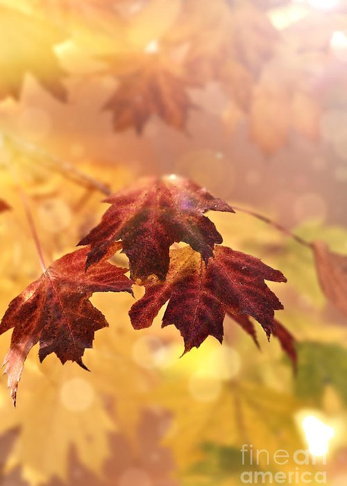 Autumn Greeting Card featuring the photograph Maple Leaves by Stephanie Frey