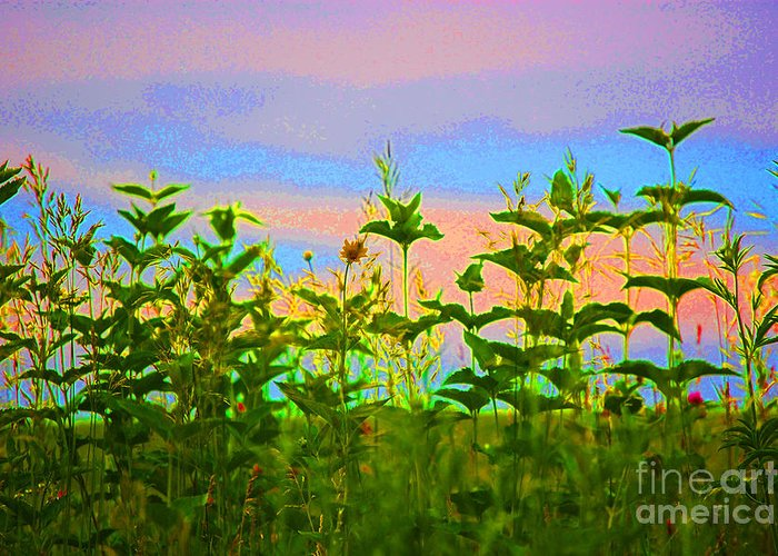 First Star Art Greeting Card featuring the photograph Meadow Magic by First Star Art