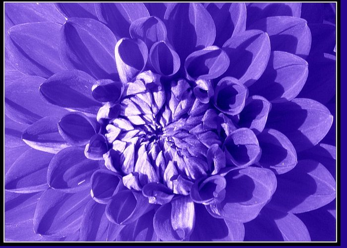 Dahlia Greeting Card featuring the photograph Pretty In Magenta by Dora Sofia Caputo Photographic Design and Fine Art
