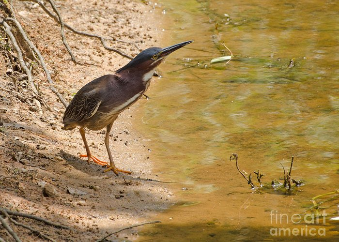 Bird Greeting Card featuring the photograph Shady Spot by Donna Brown