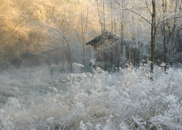 Frost Greeting Cards