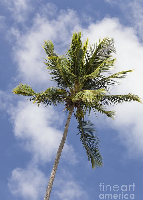 Cloudscape Greeting Card featuring the photograph Sky And Palm Tree With Coconuts by Bryan Mullennix