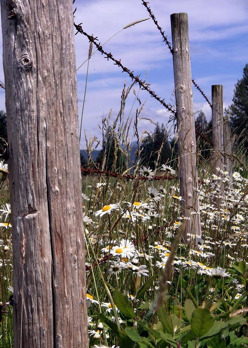Country Greeting Card featuring the photograph The Fenceline by David Lucero