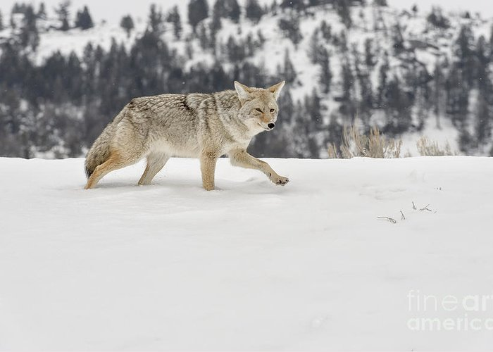 Wildlife Greeting Card featuring the photograph Winter's Determination by Sandra Bronstein