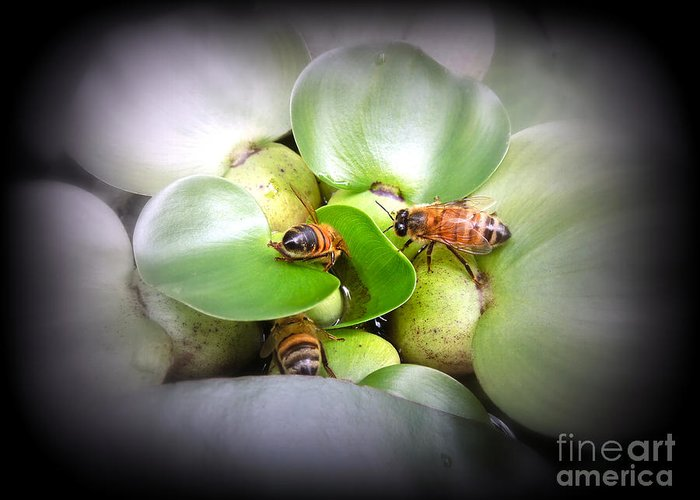 Honey Greeting Card featuring the photograph 1 . 2 . 3 . Honeybees by Renee Trenholm