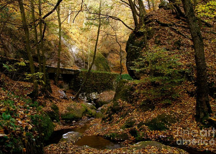 Sunlight Greeting Card featuring the photograph Forest by Odon Czintos