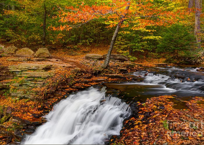 Ricketts Glen Greeting Card featuring the photograph Above Ganoga by Eric Gaston