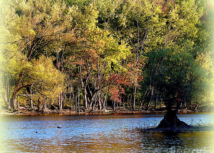 Trees Greeting Card featuring the photograph Almost Fall by Rennae Christman