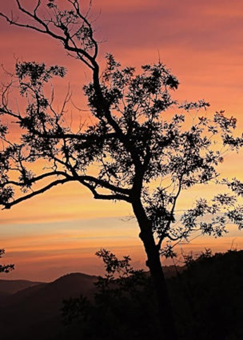 Landscape Greeting Card featuring the photograph Amicalola Falls Sunset by Robert Richardson