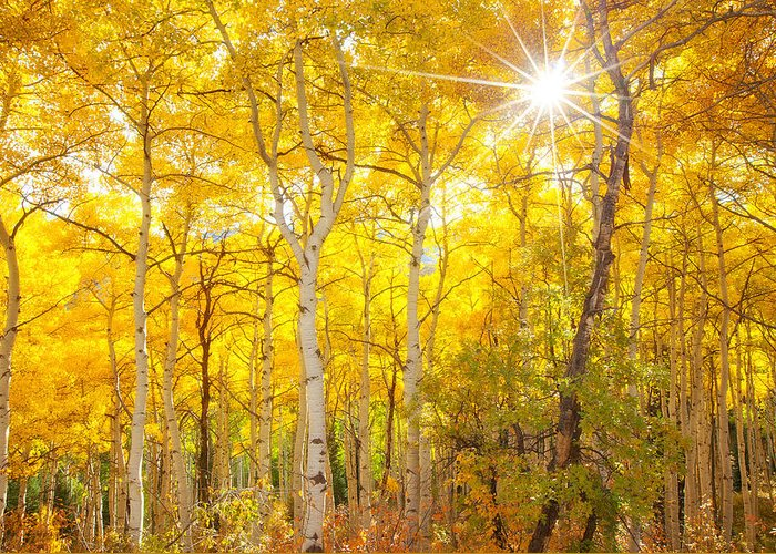 Aspens Greeting Card featuring the photograph Aspen Morning by Darren White