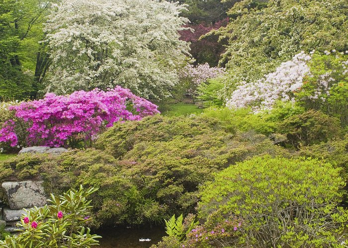 Japanese Garden Greeting Card featuring the photograph Asticou Azelea Garden - Northeast Harbor - Mount Desert Island - Maine by Keith Webber Jr