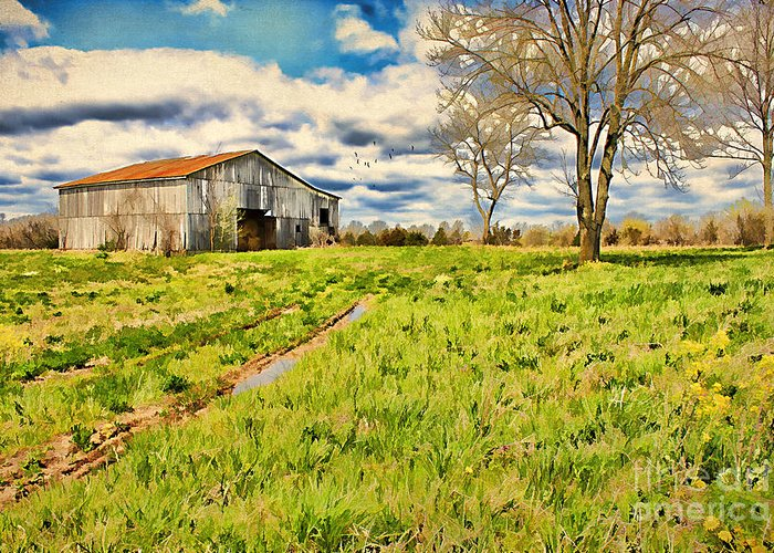 Acre Greeting Card featuring the photograph Back Roads Of Kentucky by Darren Fisher
