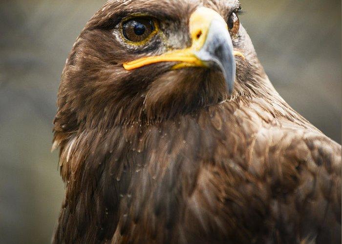 Animal Greeting Card featuring the photograph Beautiful Golden Eagle Portrait by Aleksandar Mijatovic