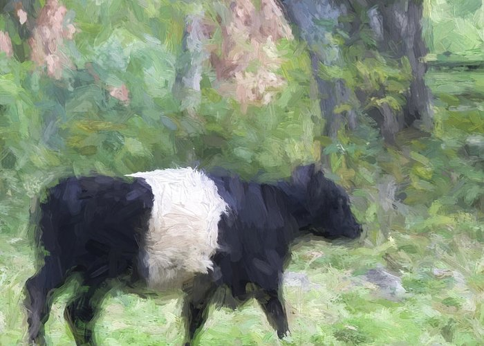 Belted Galloway Greeting Cards