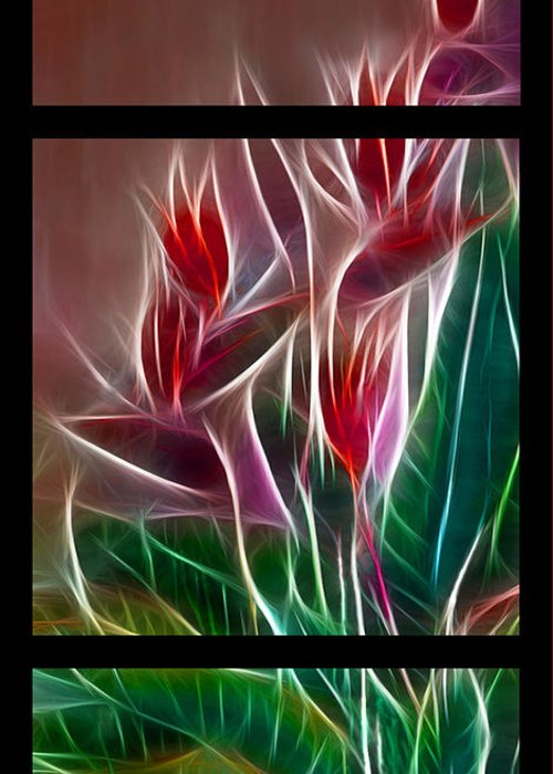Bird Of Paradise Greeting Card featuring the digital art Bird Of Paradise Fractal by Peter Piatt