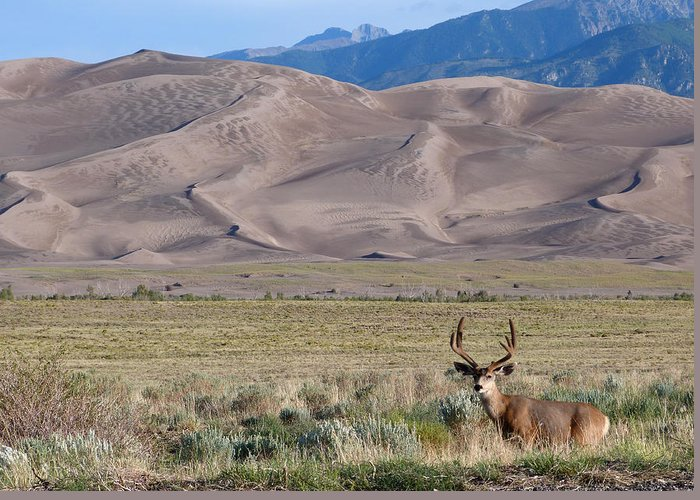Nature Greeting Card featuring the photograph Buck At Great Sand Dunes by Susan Porter