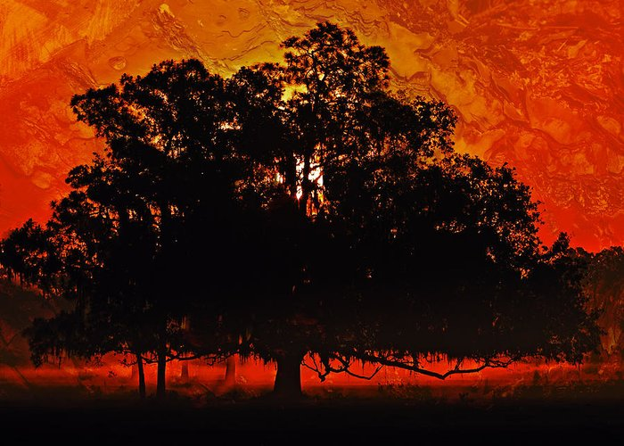 Tree Greeting Card featuring the photograph Burning Tree by Stephen Warren
