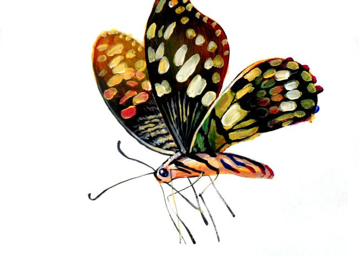 Oil Painting Greeting Card featuring the drawing Butterfly by Rossi Zheng