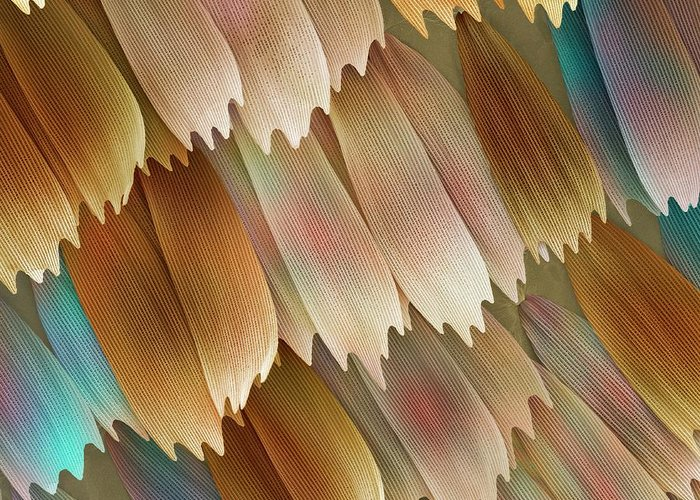 Morpho Aega Greeting Card featuring the photograph Butterfly Wing Scales by Power And Syred