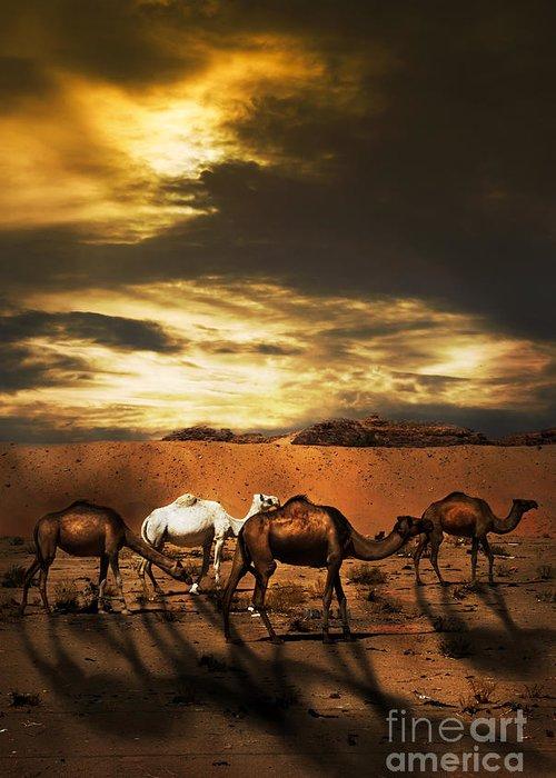 Sahara Sunlight Photographs Greeting Cards