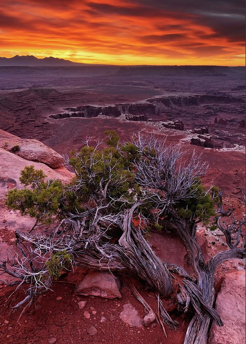 Scenics Greeting Card featuring the photograph Canyonlands Sunrise Landscape With Dry by Rezus