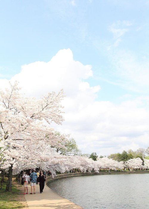 America Greeting Card featuring the photograph Cherry Blossoms - Washington Dc - 01131 by DC Photographer