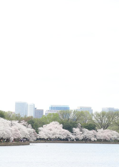 America Greeting Card featuring the photograph Cherry Blossoms - Washington Dc - 011316 by DC Photographer