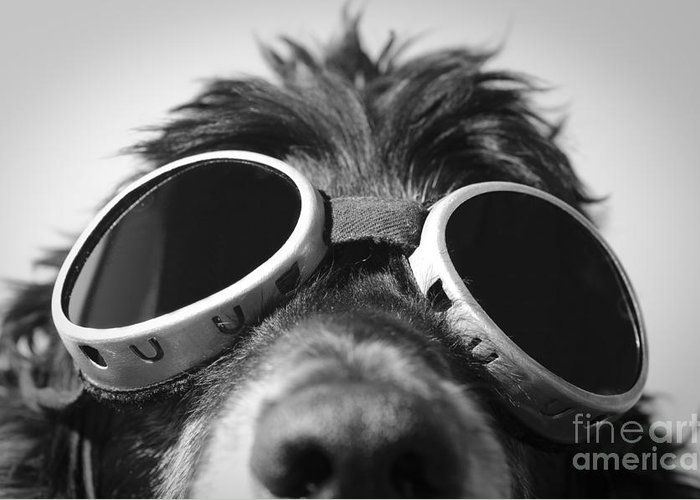 Dog Greeting Card featuring the photograph Cool Dog by Mats Silvan