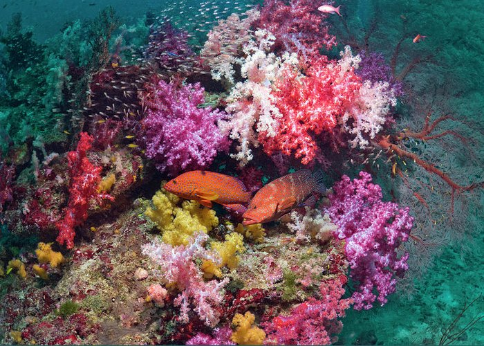Tranquility Greeting Card featuring the photograph Coral Reef Scenery by Georgette Douwma