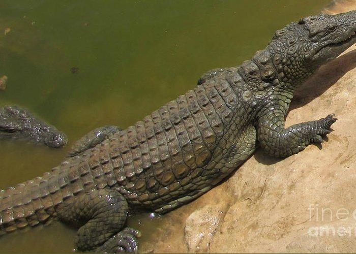 Crocodiles Greeting Card featuring the photograph crocodile of the Nile by Bozena Simeth
