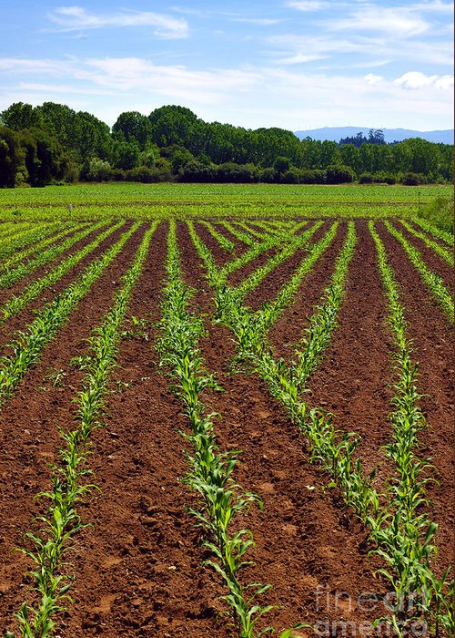 Agricultural Greeting Card featuring the photograph Cultivated Land by Carlos Caetano