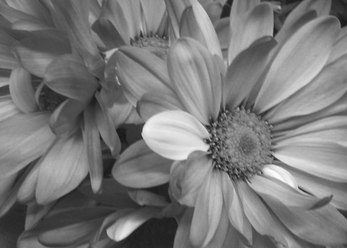 Daisy Greeting Card featuring the photograph Daisy by Paulo Leal