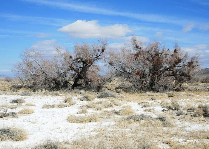 Trees Greeting Card featuring the photograph Death Valley by Horst Duesterwald