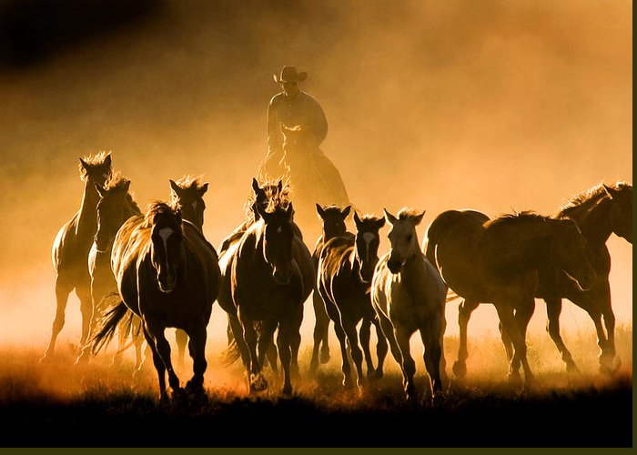 Horses Wrangler Ranching Greeting Card featuring the photograph Driving the Herd by Lourie Zipf