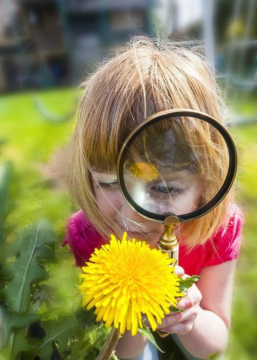looking at flower with magnifying glass