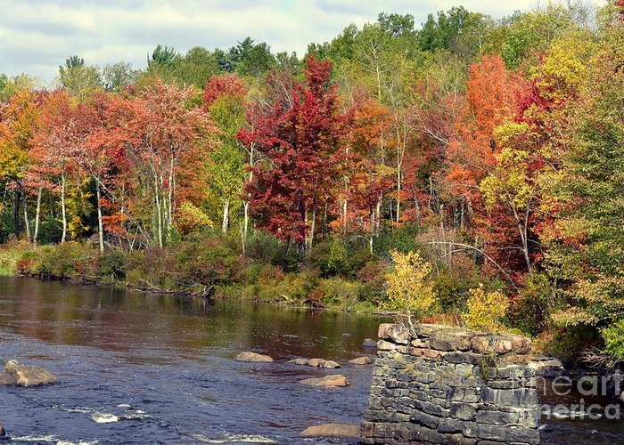 Fall Greeting Card featuring the photograph Fall At The River by Leona Bessey