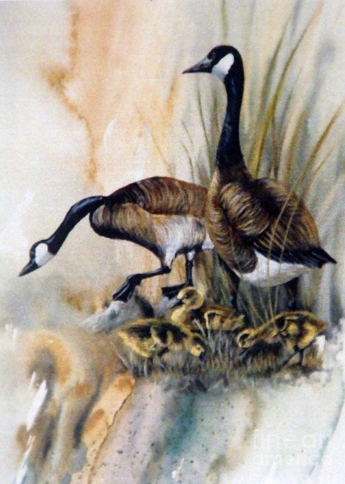 Canadian Geese With Their Young Greeting Card featuring the painting Family Affair by Lynne Parker
