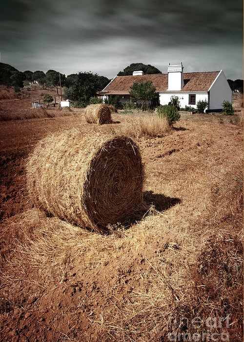 Field Greeting Card featuring the photograph Farmland by Carlos Caetano