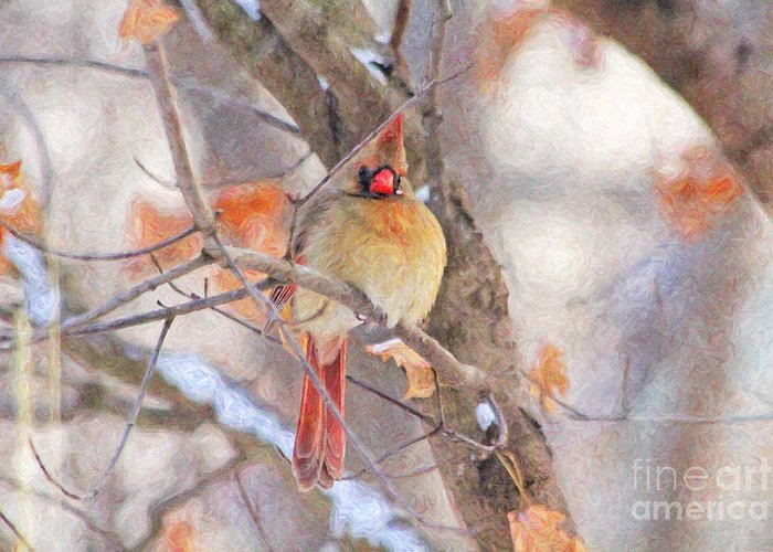 Cardinal Greeting Card featuring the photograph Female Cardinal In Winter by Jack Schultz