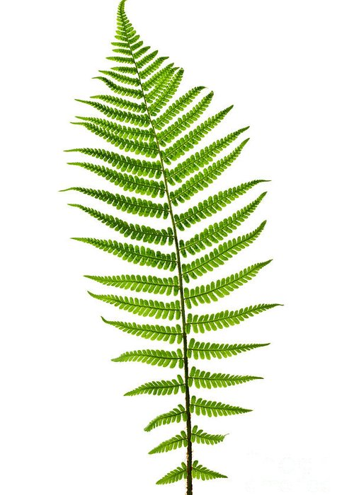 Frond Greeting Cards