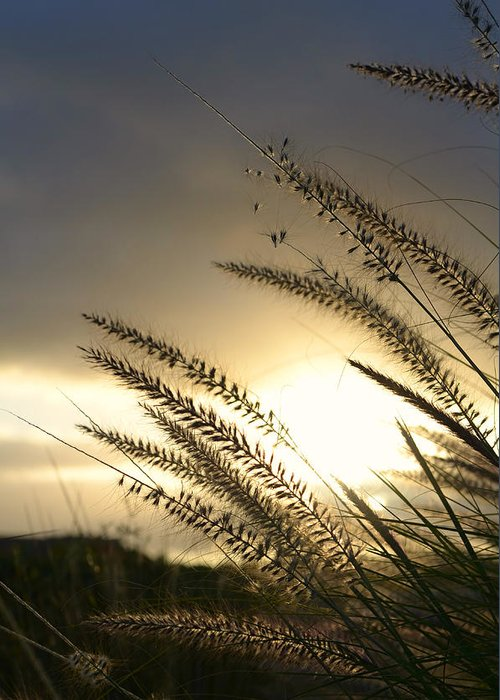 Sunlight Greeting Card featuring the photograph Field Of Dreams by Laura Fasulo
