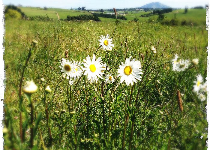 Beautiful Greeting Card featuring the photograph Field Of Flowers by Les Cunliffe