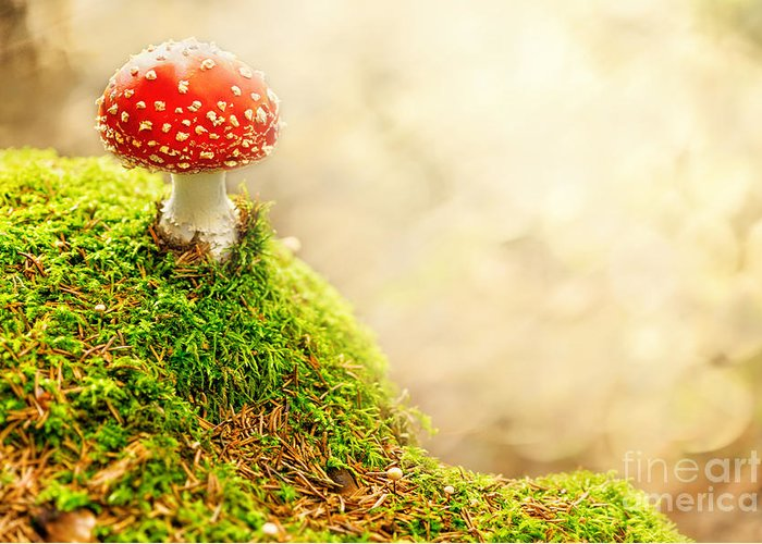 Agaric Greeting Card featuring the pyrography Fly Agaric by Stefan Holm