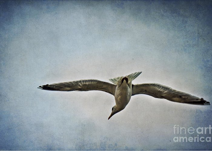 Flying Seagull Mixed Media Greeting Cards