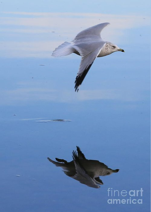 Bird Greeting Card featuring the photograph Free Spirit by Carol Groenen